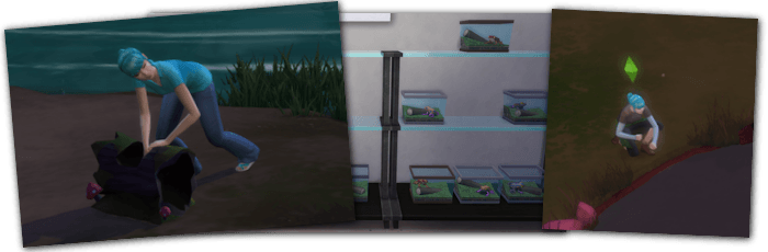 Collections Sims 4 grenouilles