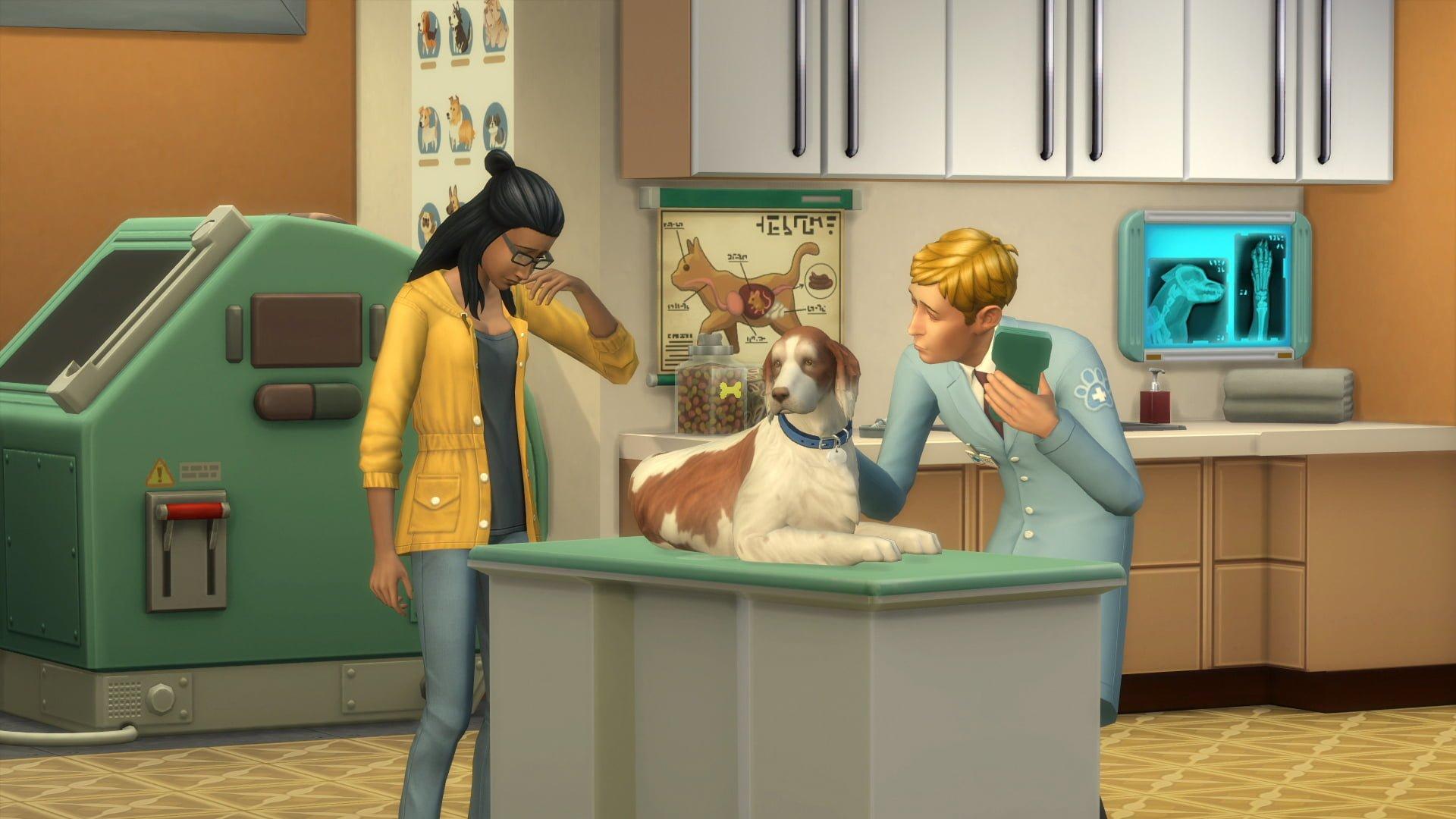La carrière vétérinaire détaillée