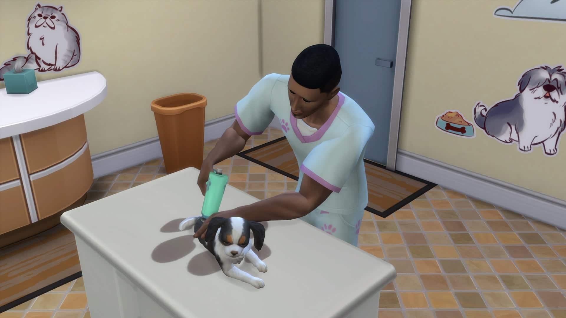 Piqure vétérinaire sims 4 chiens et chats