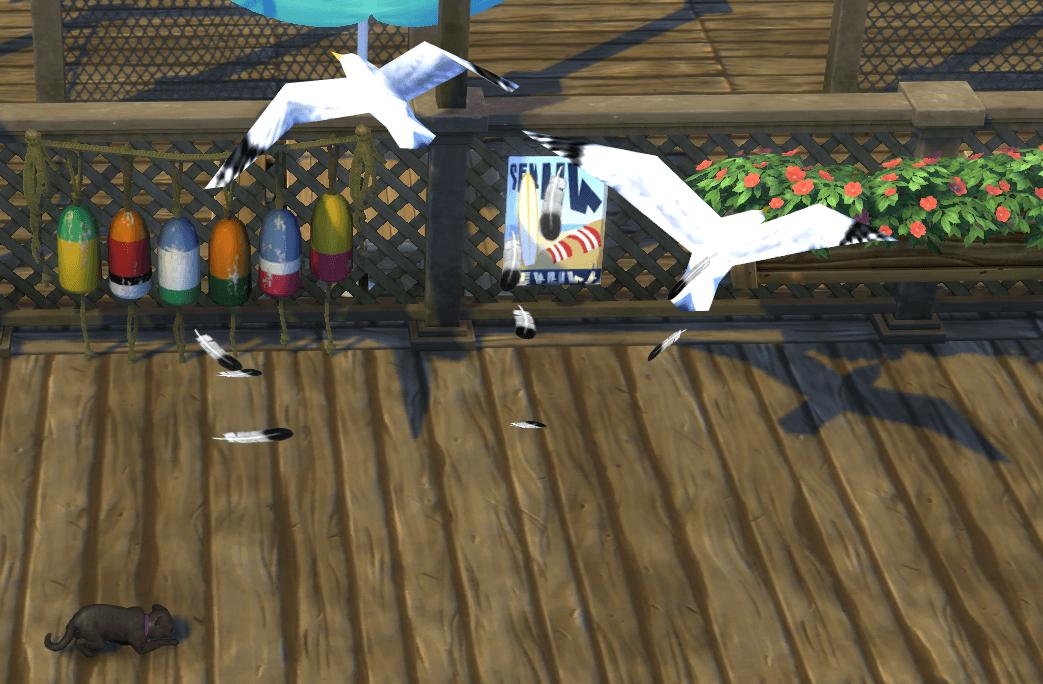 Zoom sur les collections de plumes