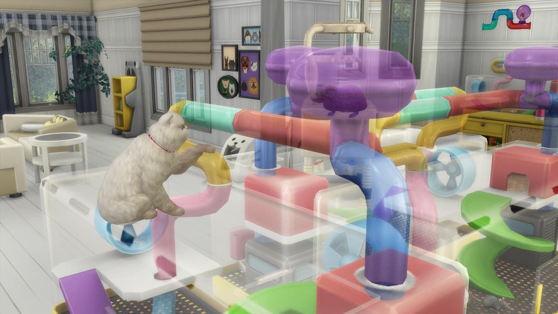 Chat sims 4 premier animal de compagnie