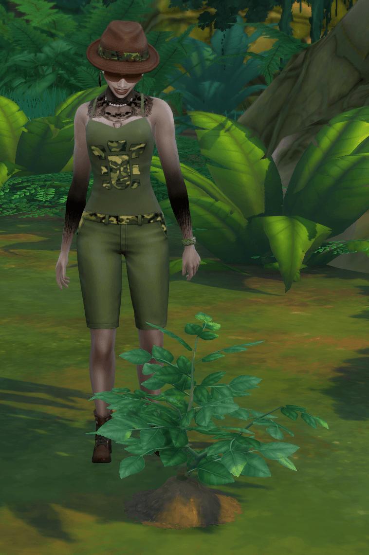Zoom sur les collections de la jungle