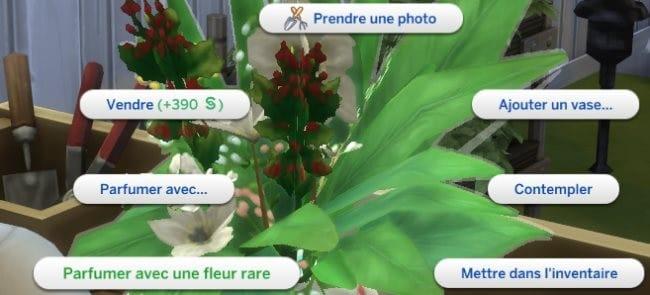 Parfumer avec une fleur rare sims 4 saisons
