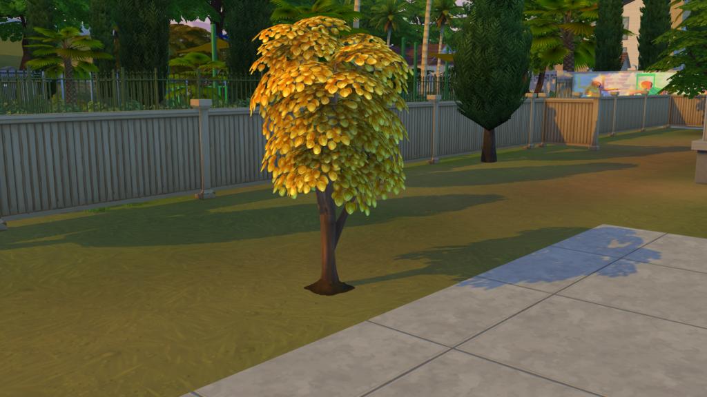 Tout savoir sur l'arbre à simflouz
